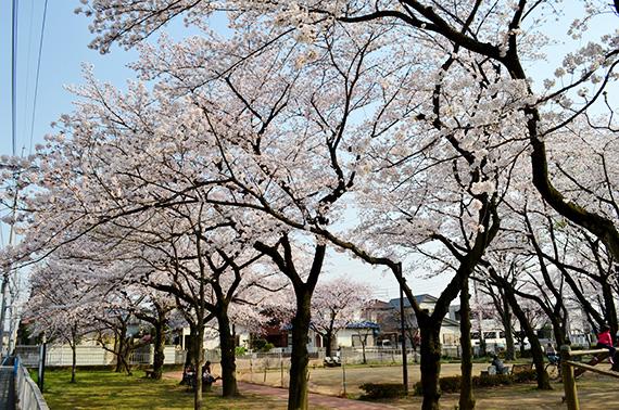 sakura-mitsuwakoen